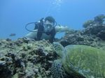 Hawaii Scuba divng 39