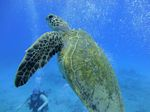 Hawaii Scuba divng 49