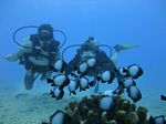 Hawaii Scuba divng 68