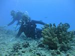 Hawaii Scuba divng 16