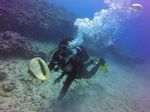 Hawaii Scuba divng 12