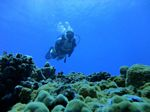 Hawaii Scuba divng 67