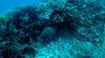 Hawaii Scuba divng 14