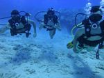 Hawaii Scuba divng 85