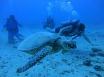 Hawaii Scuba divng 30