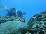 Hawaii Scuba divng 51