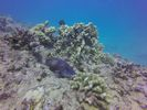 Hawaii Scuba divng 42
