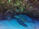 Hawaii Scuba divng 81
