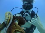Hawaii Scuba divng 29