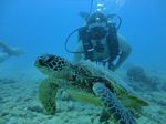 Hawaii Scuba divng 54