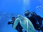 Hawaii Scuba divng 71