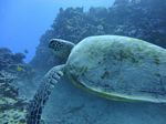 Hawaii Scuba divng 44