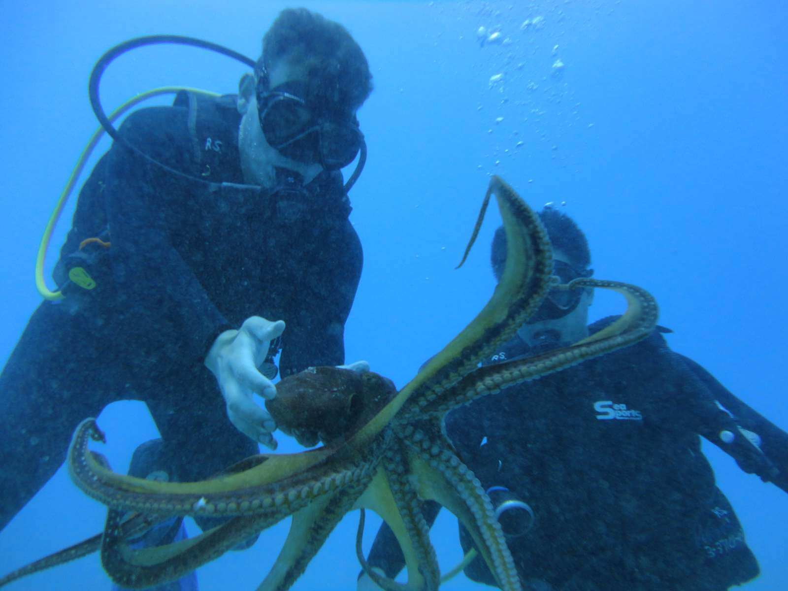 Scuba Diver First time scuba dive hawaii,