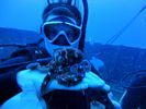 Hawaii Scuba diving 10