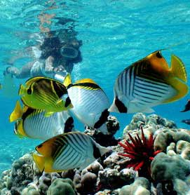 Hawaii snorkeling tour