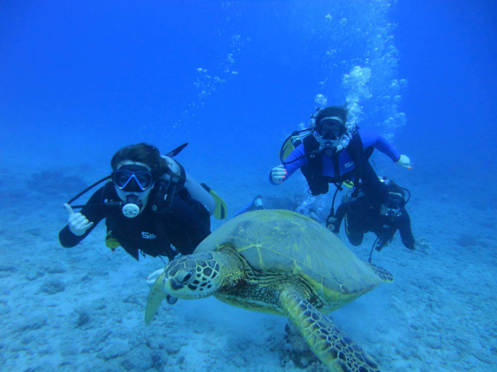 Hawaii Scuba Diving, PADI Certification, Honolulu Scuba