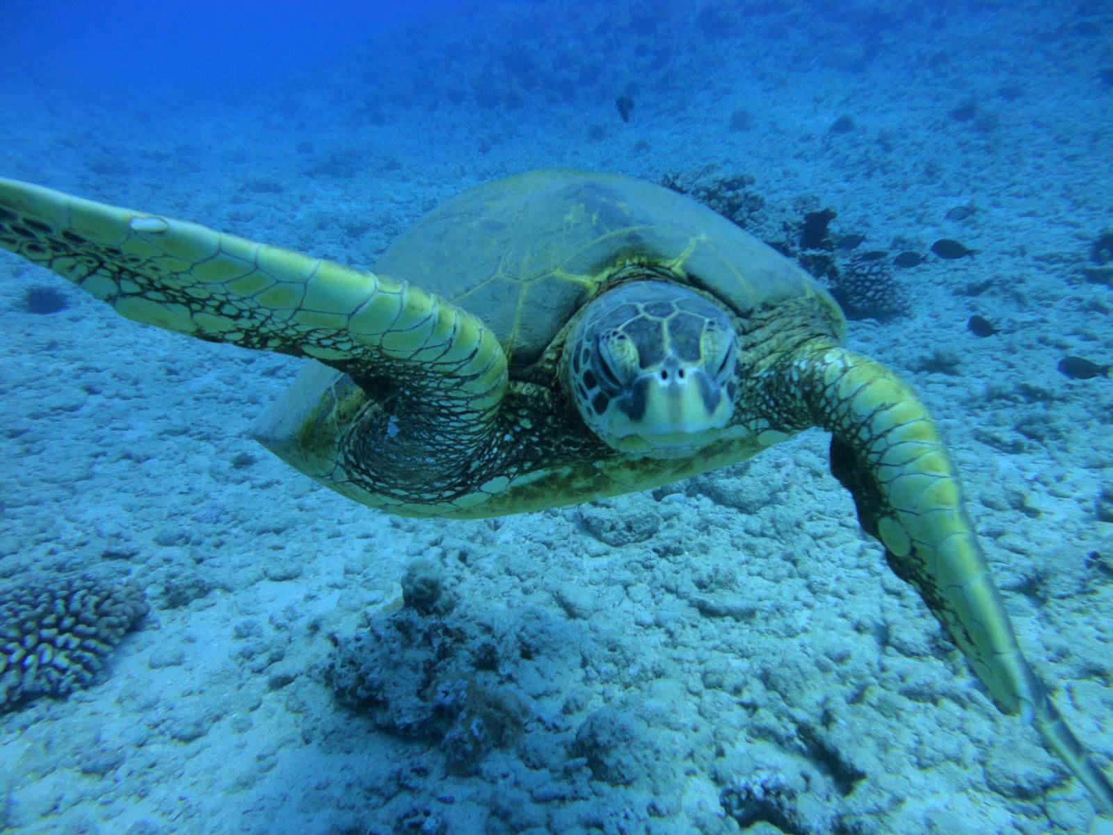 Oahu Diving (Honolulu) - 2019 All You Need to Know BEFORE ...